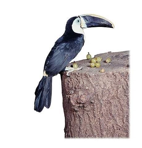 دانلود مجموعه ی تصاویر وکتور و لایه باز با موضوع پرندگان برای استفاده در طراحی گرافیکی