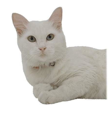 دانلود مجموعه ی تصاویر وکتور و لایه باز با موضوع گربه ها برای استفاده در طراحی گرافیکی